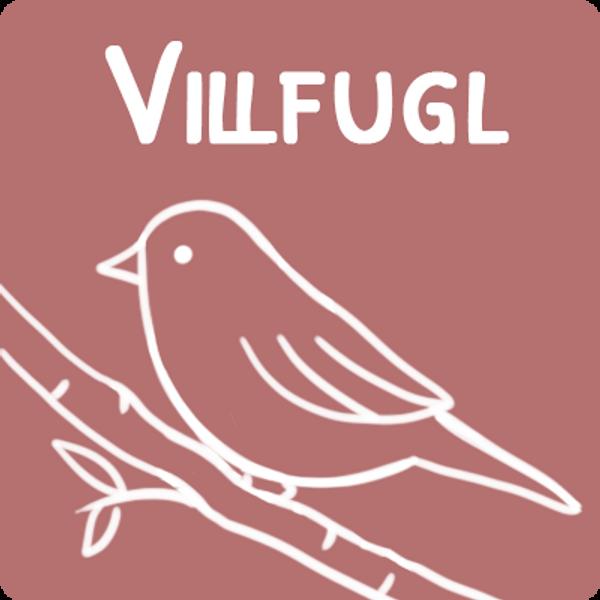Utefugl, vildfugl, meiseboller, frø blanding utefugl, solsikke frø, fettkuler til utefugl, fuglematere, fuglebad,